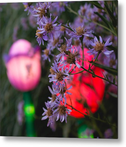 Photography Metal Print featuring the photograph Lilac Aster And Light by Christine Buckley