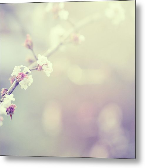 Silence Metal Print featuring the photograph Little Flowers In Winter by Rike