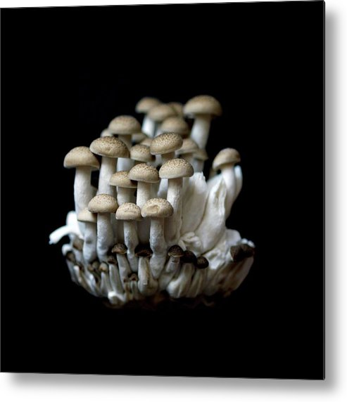 Edible Mushroom Metal Print featuring the photograph Mushoom Against Black Background by Zachary Rathore