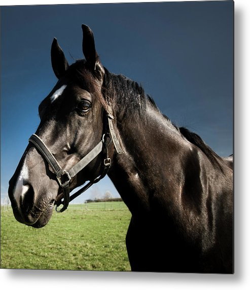 Horse Metal Print featuring the photograph On The Meadow by Pixalot