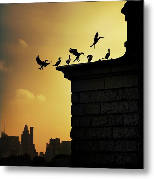 Central Park Metal Print featuring the photograph Silhouettes Of Cormorants by Istvan Kadar Photography