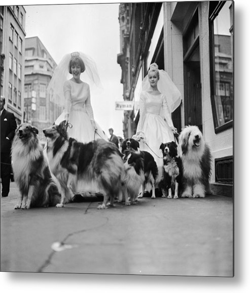 Wedding Dress Metal Print featuring the photograph Soho Sheep Dogs by Ronald Dumont