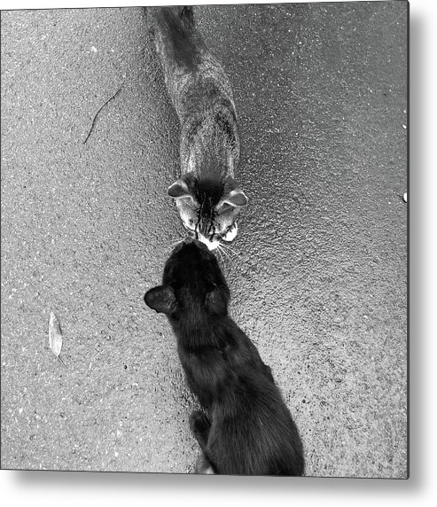 Pets Metal Print featuring the photograph Two Kittens Which Kiss by Photographer, Loves Art, Lives In Kyoto