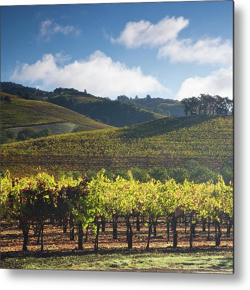 Sonoma County Metal Print featuring the photograph Vineyards Autumn Time In Sonoma Valley by Darrell Gulin