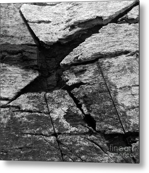 Black And White Metal Print featuring the photograph Black And White Beauty by Randall Weidner