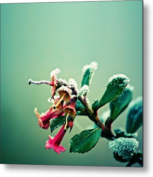 Snow Metal Print featuring the photograph Frosty urban acid trumpet bokeh by s0ulsurfing - Jason Swain