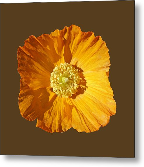 Yellow Poppy Metal Print featuring the painting Poppy by Charles Stuart