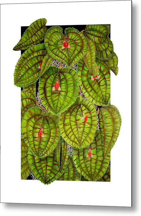 Orchid Metal Print featuring the painting Lepanthes Calodictyon by Darren James Sturrock