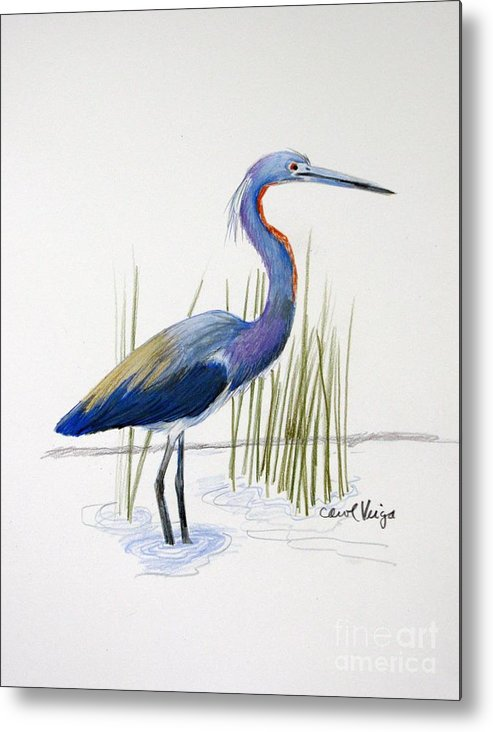 Tricolored Heron Metal Print featuring the drawing Tricolored Heron by Carol Veiga