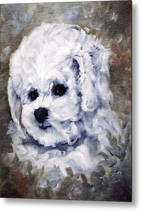 Animal Metal Print featuring the painting Little Bichon by Jimmie Trotter