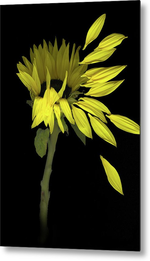 Sunflower Metal Print featuring the digital art Sunflower Breeze by Sandi F Hutchins