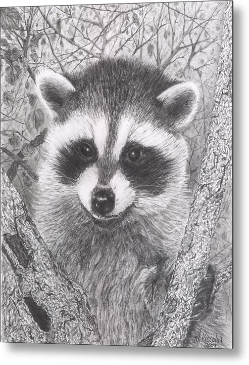 Raccoon Metal Print featuring the drawing Raccoon Kit by Marlene Piccolin