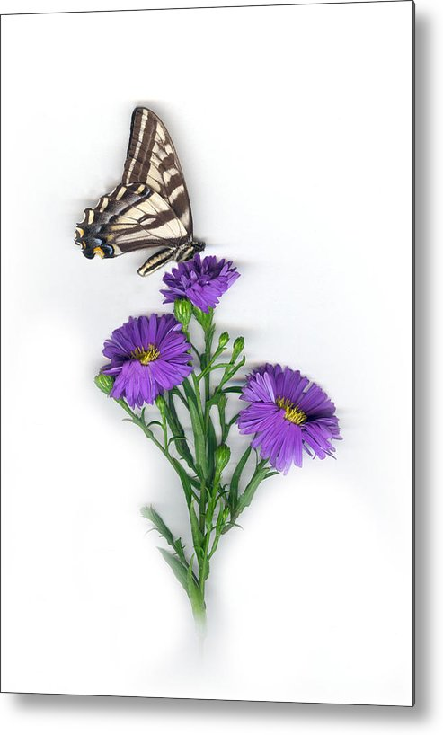 Aster Flower Metal Print featuring the mixed media Aster and Butterfly by Sandi F Hutchins