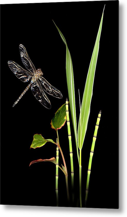 Dragonfly Metal Print featuring the photograph Dragonfly Wings by Sandi F Hutchins