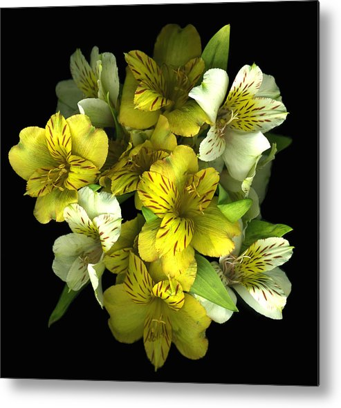 Yellow Metal Print featuring the photograph Yellow Explosion by Deborah J Humphries