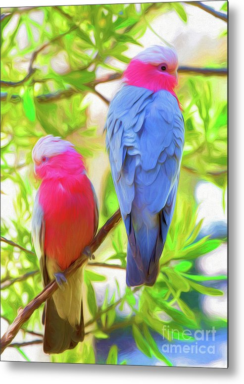 Galahs Metal Print featuring the photograph Rose cockatoos by Sheila Smart Fine Art Photography