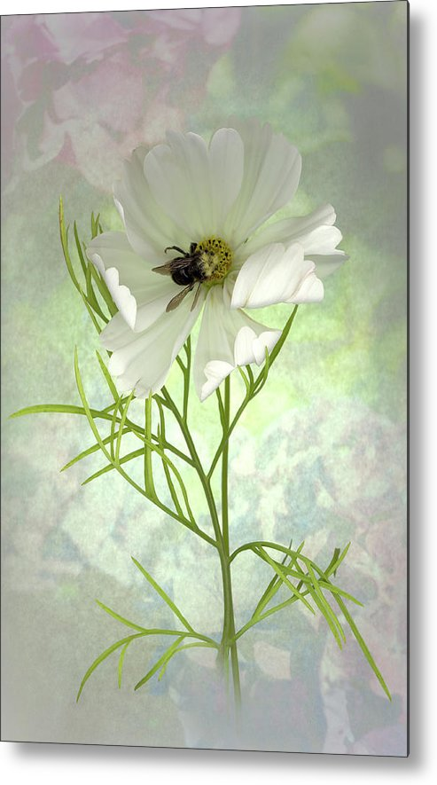 Cosmo Metal Print featuring the photograph Delicate Nature of Both by Sandi F Hutchins