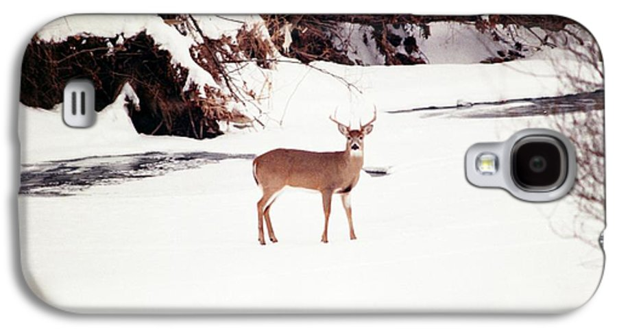 Whitetail Deer Galaxy S4 Case featuring the photograph 080706-89 by Mike Davis
