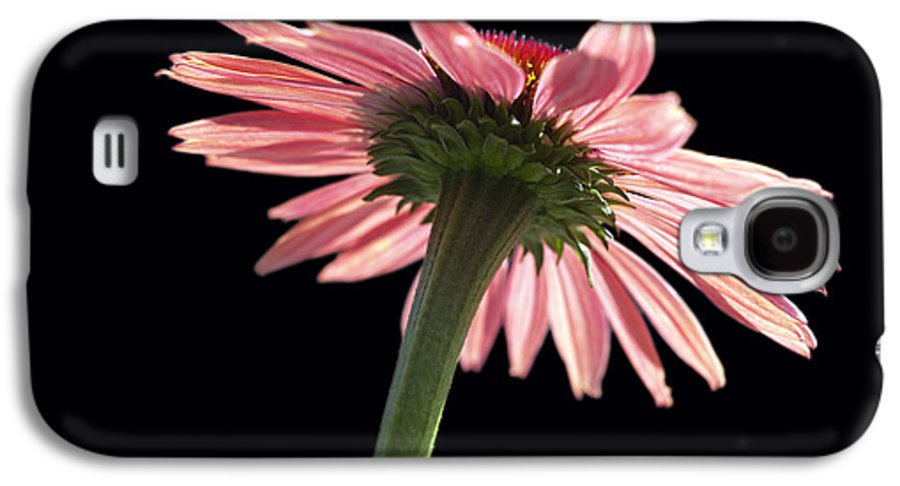Echinacea Galaxy S4 Case featuring the photograph Coneflower by Tony Cordoza