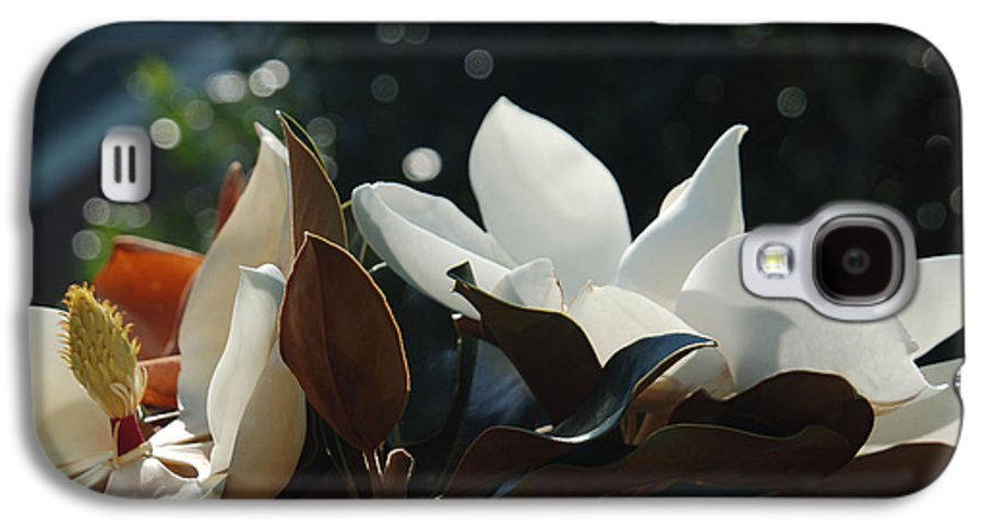 Magnolia Galaxy S4 Case featuring the photograph A Sea Of Magnolias by Suzanne Gaff