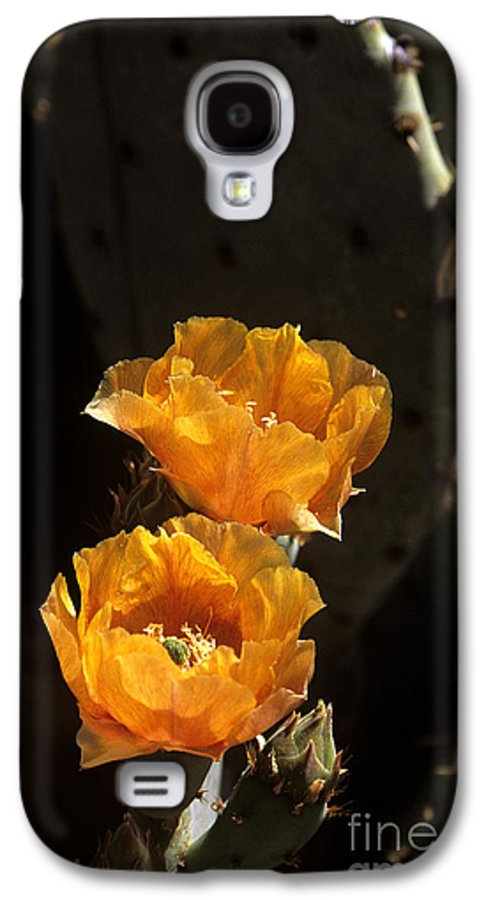 Cactus Galaxy S4 Case featuring the photograph Apricot Blossoms by Kathy McClure