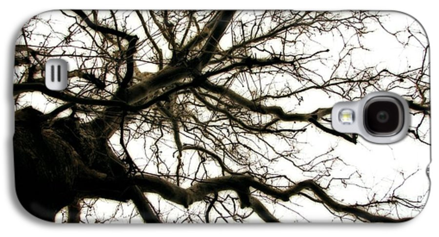Branches Galaxy S4 Case featuring the photograph Branches by Michelle Calkins