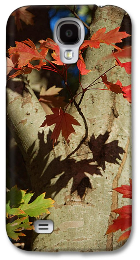 Autumn Galaxy S4 Case featuring the photograph Carolina Autumn by Suzanne Gaff