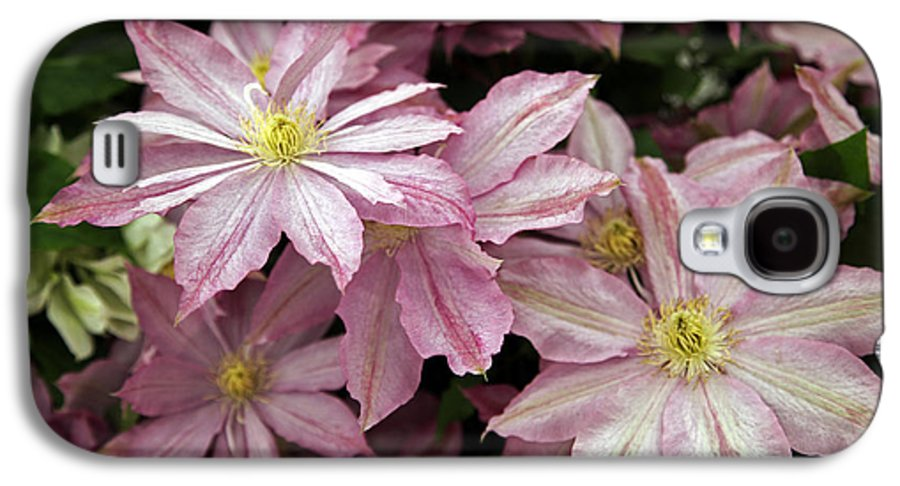 Rhs Chelsea Flower Show Galaxy S4 Case featuring the photograph Clematis First Lady by Ros Drinkwater