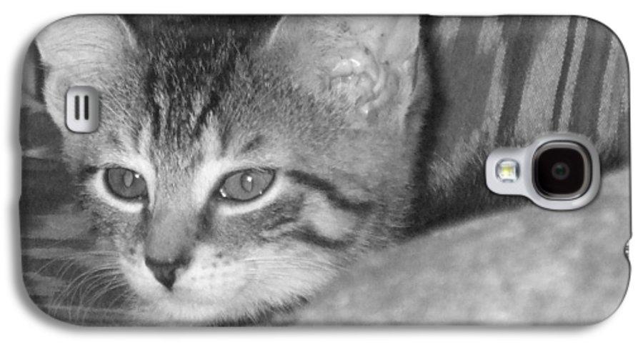 Kitten Galaxy S4 Case featuring the photograph Comfy Kitten by Pharris Art