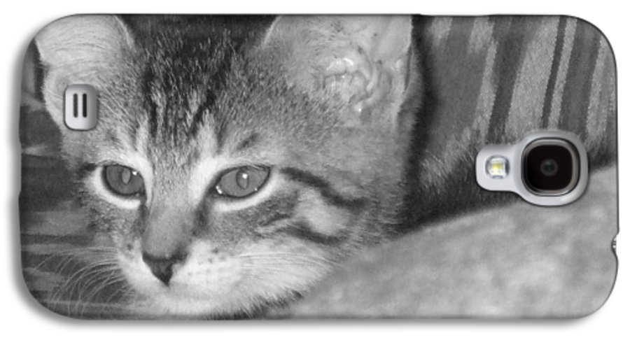 Kitten Galaxy S4 Case featuring the photograph Comfy Kitten by Pharris Art