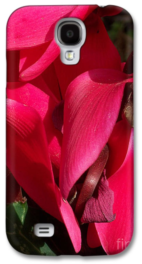 Flowers Galaxy S4 Case featuring the photograph Cyclamen by Kathy McClure