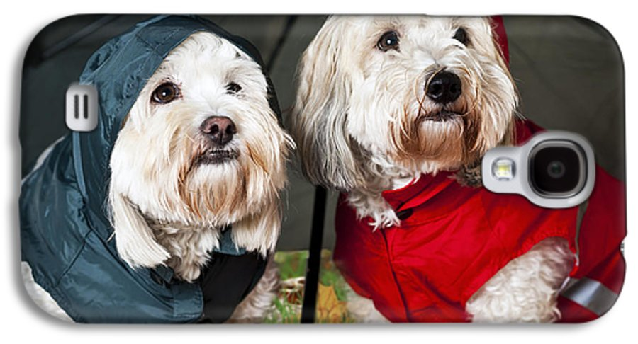 Dogs Galaxy S4 Case featuring the photograph Dogs Under Umbrella by Elena Elisseeva