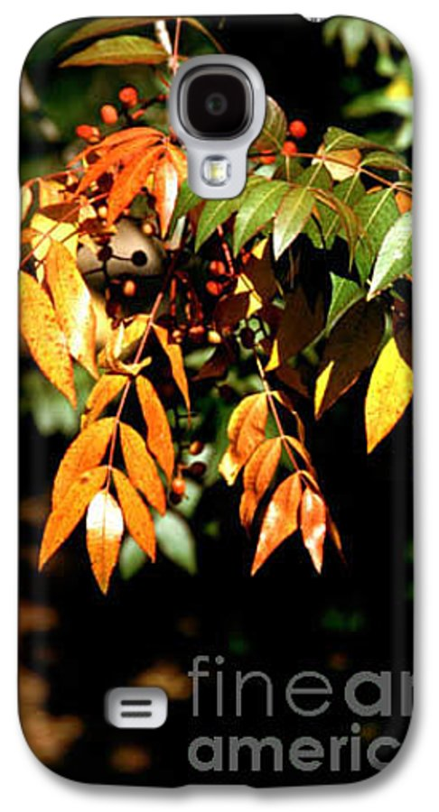 Fall Color Galaxy S4 Case featuring the photograph Fall Leaves by Kathy McClure