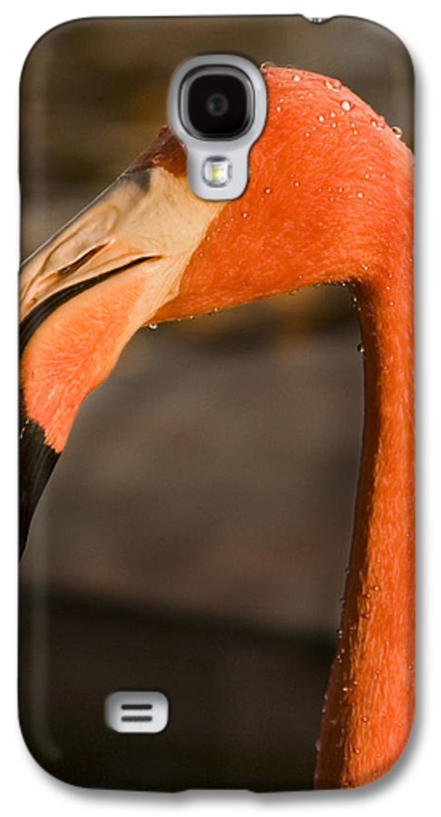 3scape Photos Galaxy S4 Case featuring the photograph Flamingo by Adam Romanowicz