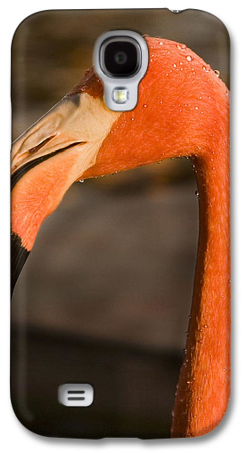 3scape Galaxy S4 Case featuring the photograph Flamingo by Adam Romanowicz
