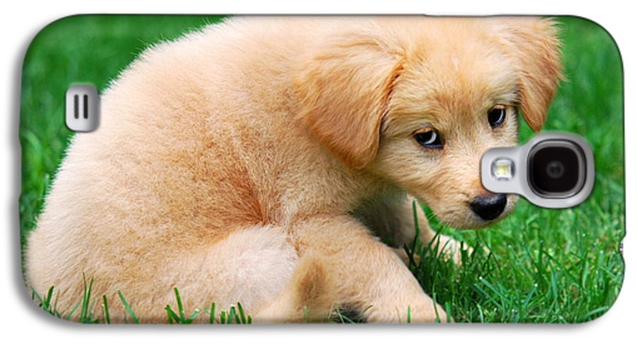 Puppy Galaxy S4 Case featuring the photograph Fuzzy Golden Puppy by Christina Rollo