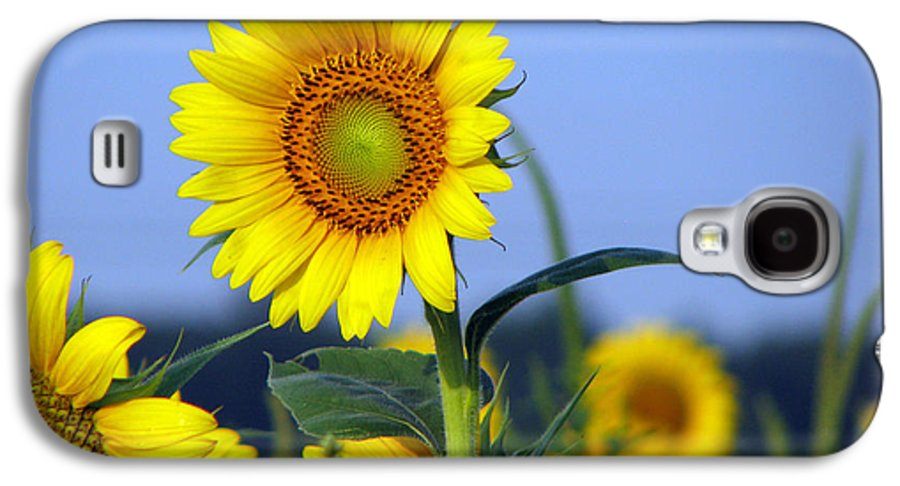 Sunflower Galaxy S4 Case featuring the photograph Getting To The Sun by Amanda Barcon