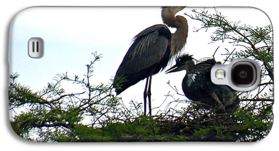 Blue Heron Galaxy S4 Case featuring the photograph Great Blue Heron With Fledglings II by Suzanne Gaff