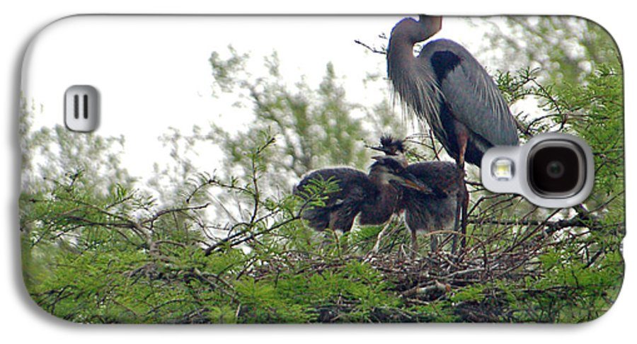 Great Blue Heron Galaxy S4 Case featuring the photograph Great Blue Heron With Fledglings by Suzanne Gaff