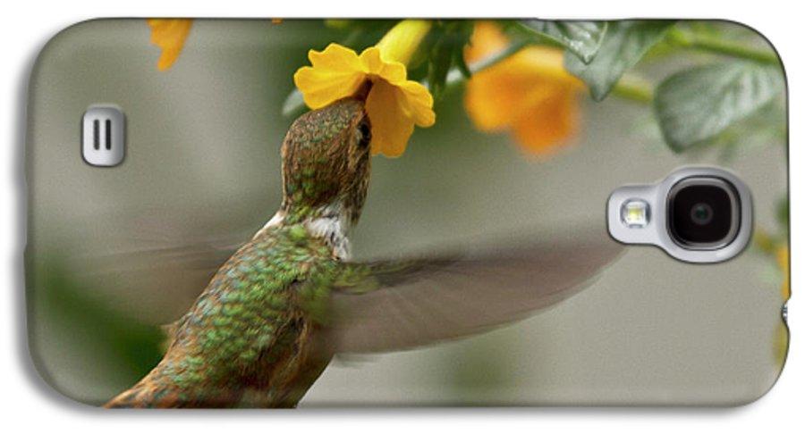 Bird Galaxy S4 Case featuring the photograph Hummingbird Sips Nectar by Heiko Koehrer-Wagner
