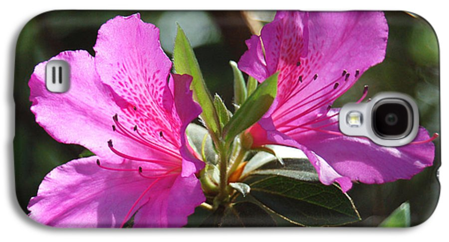 Azalea Galaxy S4 Case featuring the photograph In Full Bloom by Suzanne Gaff
