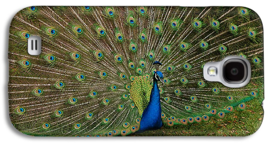 Peacock Galaxy S4 Case featuring the photograph Its All About Him by Suzanne Gaff