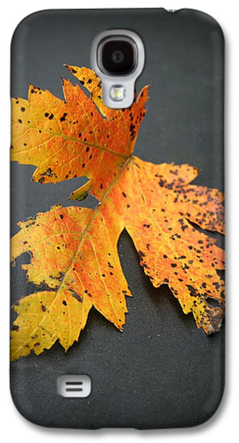 Nature Galaxy S4 Case featuring the photograph Leaf Portrait by Linda Sannuti