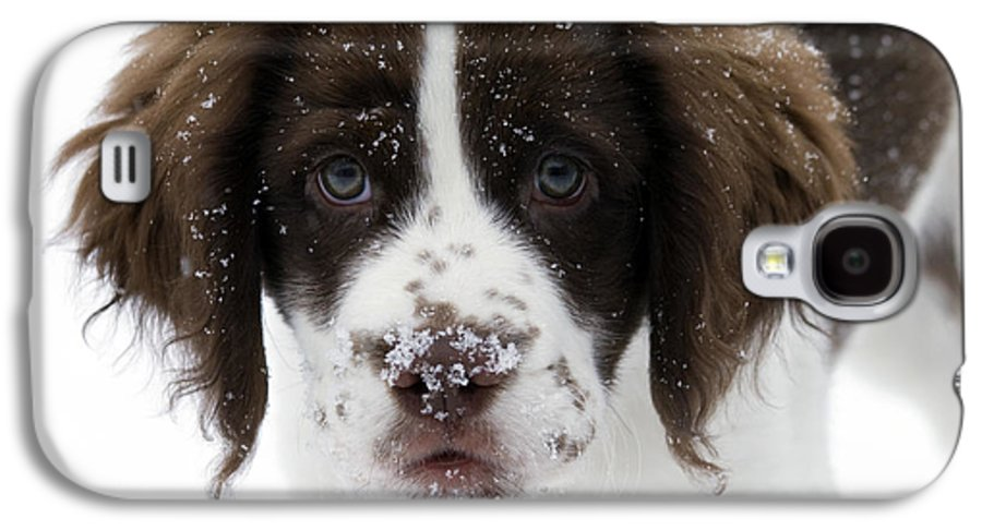 Puppy Galaxy S4 Case featuring the photograph Lets Play by Mike Dawson