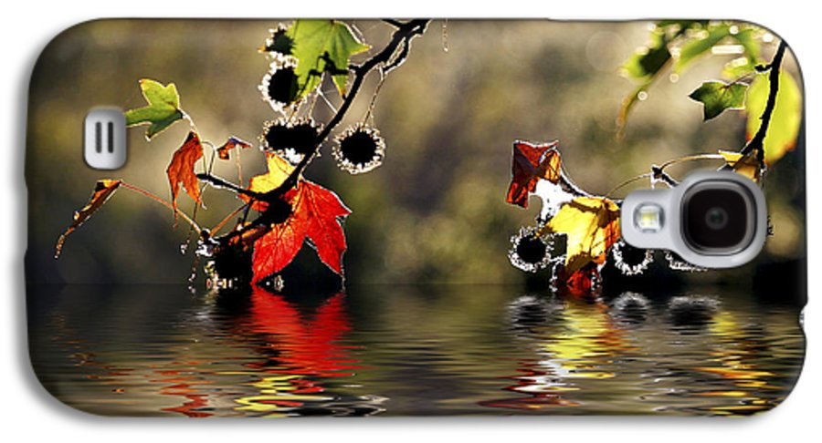 Liquidambar Maple Autumn Fall Flood Water Reflection Galaxy S4 Case featuring the photograph Liquidambar In Flood by Avalon Fine Art Photography