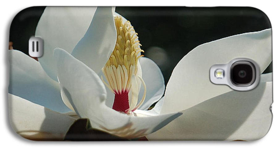 Magnolia Galaxy S4 Case featuring the photograph Magnolia Tiny Gem by Suzanne Gaff