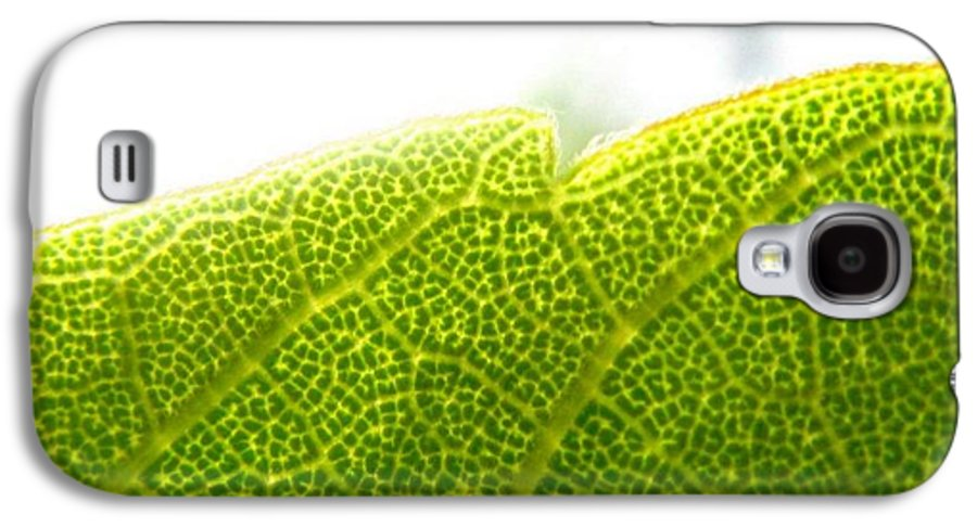 Leaf Galaxy S4 Case featuring the photograph Micro Leaf by Rhonda Barrett