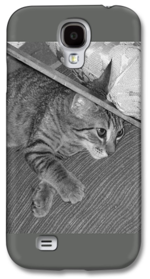 Kitten Galaxy S4 Case featuring the photograph Model Kitten by Pharris Art