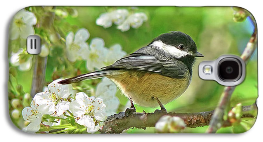 Chickadee Galaxy S4 Case featuring the photograph My Little Chickadee In The Cherry Tree by Jennie Marie Schell