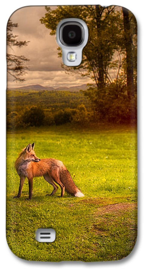 Fox Galaxy S4 Case featuring the photograph One Red Fox by Bob Orsillo